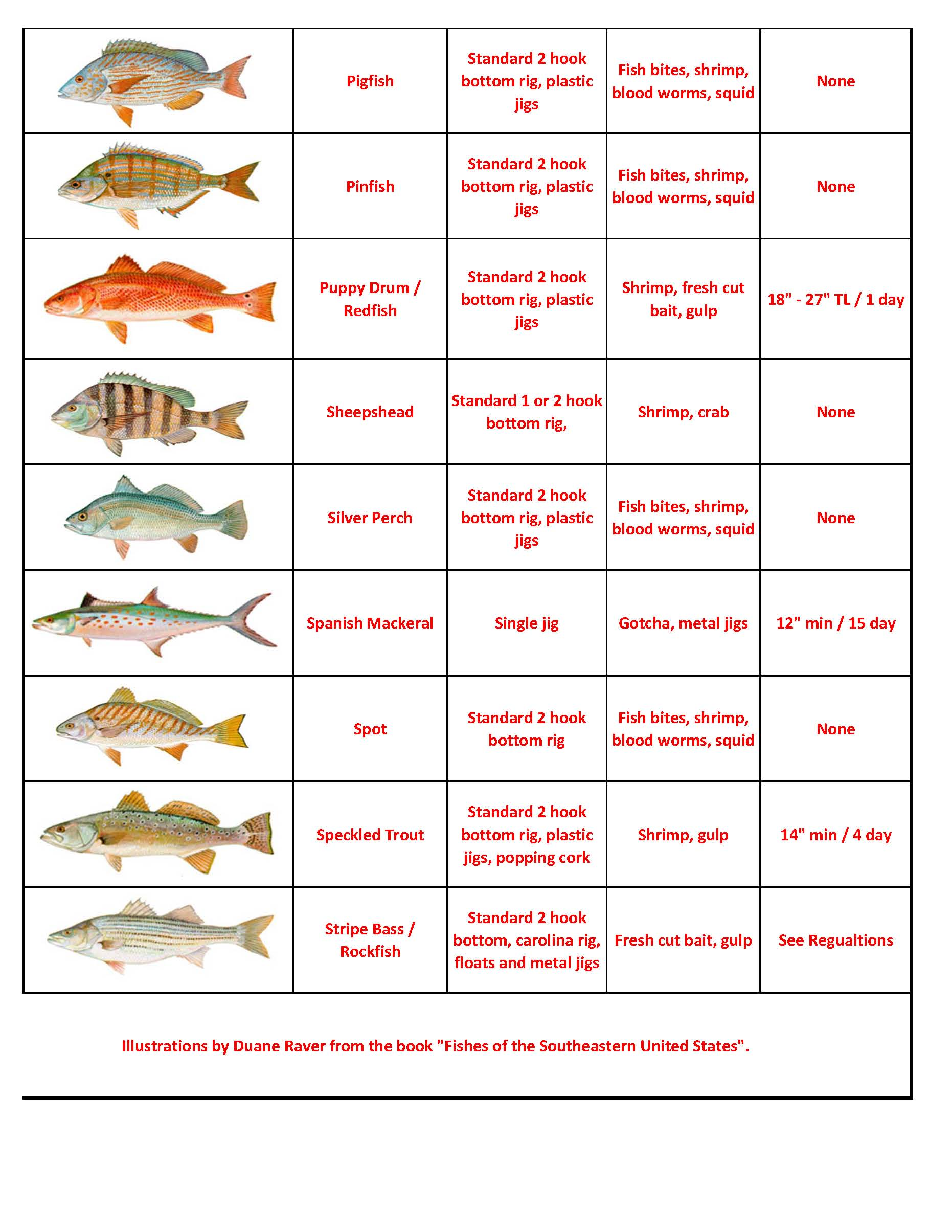 Quick look fish id capt tonys walkingangler draft fish id chart jan 2015page2 geenschuldenfo Image collections
